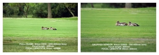 Crop sensor advantage = More zoom