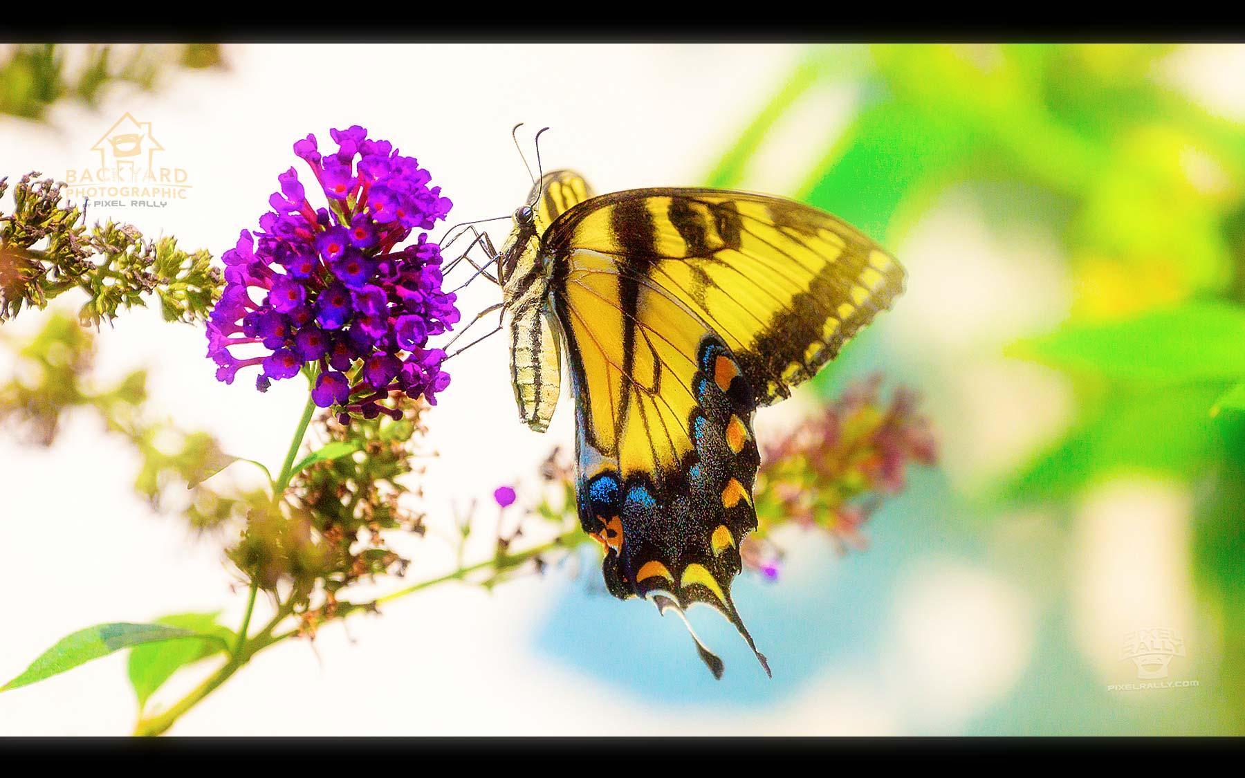 3072x3072 Pixels Butterfly Wwwtopsimagescom