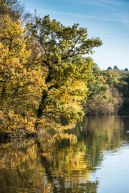 Epping Forest Colour 1
