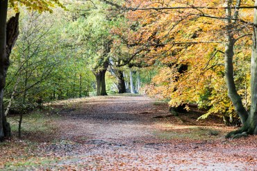 Epping Forest Colour 4