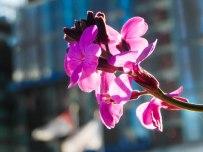 London Bloom - backlit