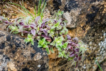 lichen-4