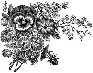 flower flowers hd wallpapers pixelstalk