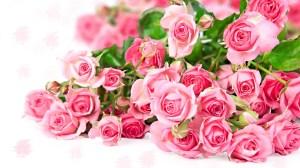 pink rose roses desktop 3d backgrounds pixelstalk