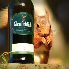 Hatching an evil plan with a glass of Glenfiddich