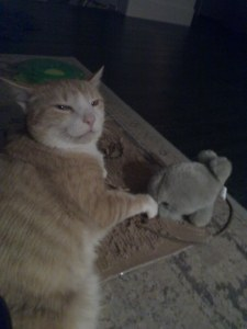 Photo of Pixelvania's mascot, Pixel J. Cat, an orange tabby with a small plush walrus toy