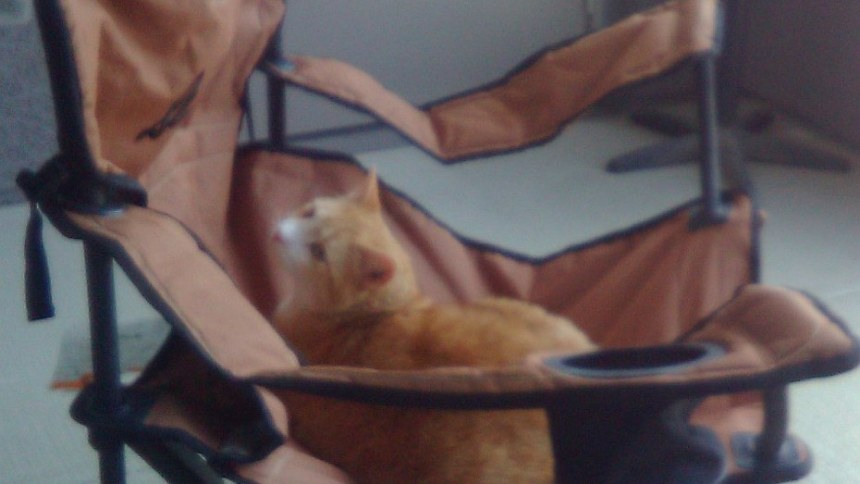 Our mascot, Pixel J. Cat, lounging in a camping chair