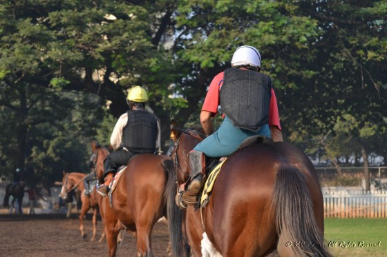 Horses retreating at the end of a practice session at Mumbai's Royal Western India Turf Club