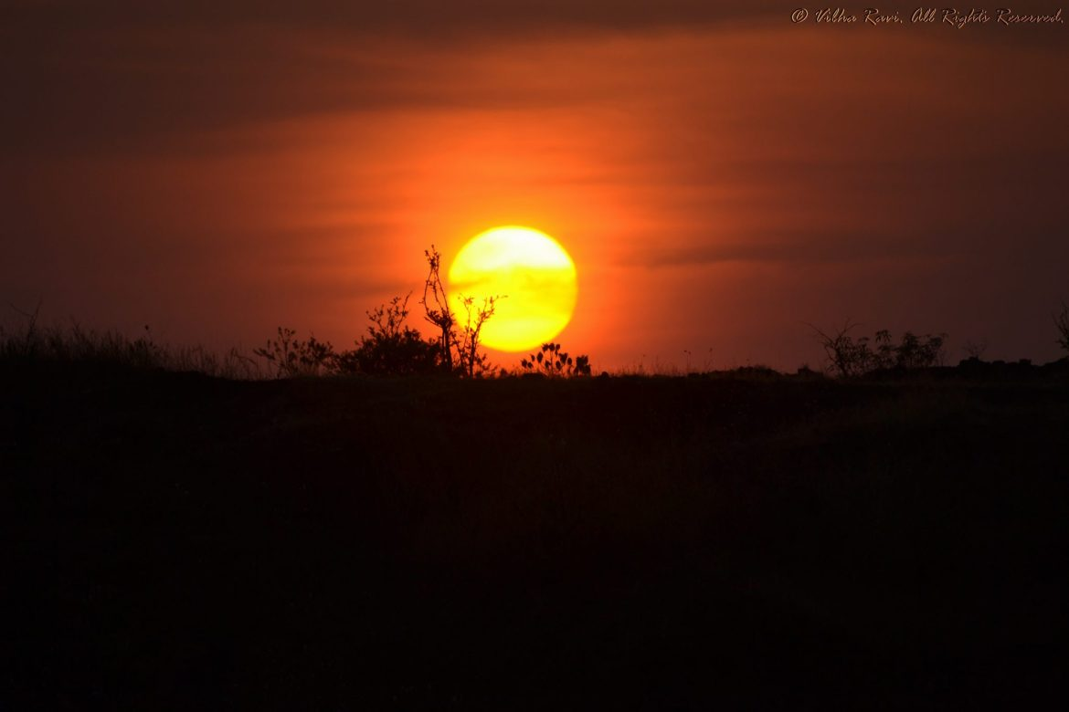 The sun sets against shrubbery