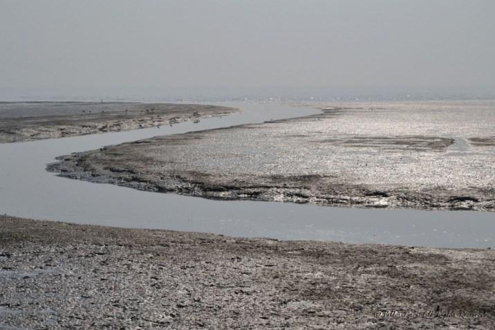 Sewri creek