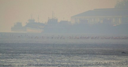 Flamingos against backdrop of derelict ships