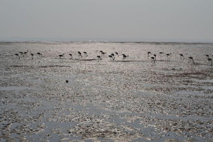 Sewri mud flats