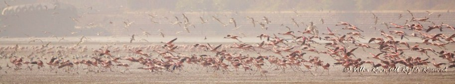 A wall of pink - flamingos in flight