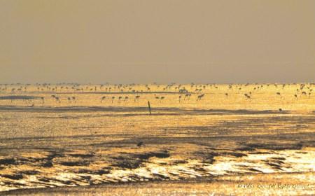 Golden spread at Sewri