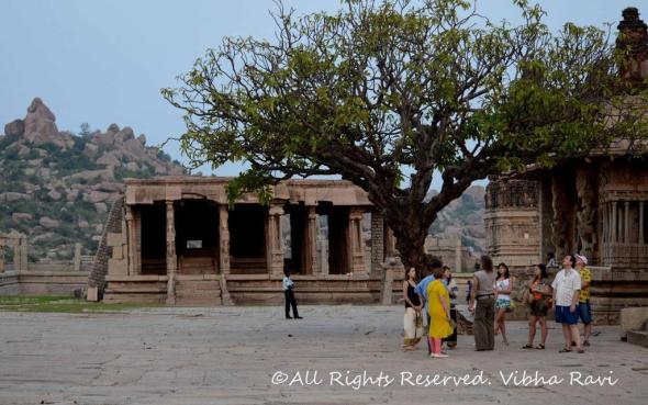 Bhajana Mandapam to the left, visitors admire a centuries old tree at the Vitthala temple, Hampi