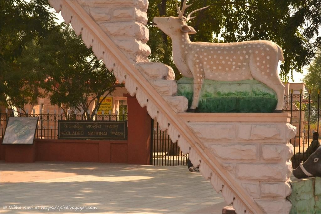While Cheetal (deer) statues greet you at the entrance of Keoladeo National Park