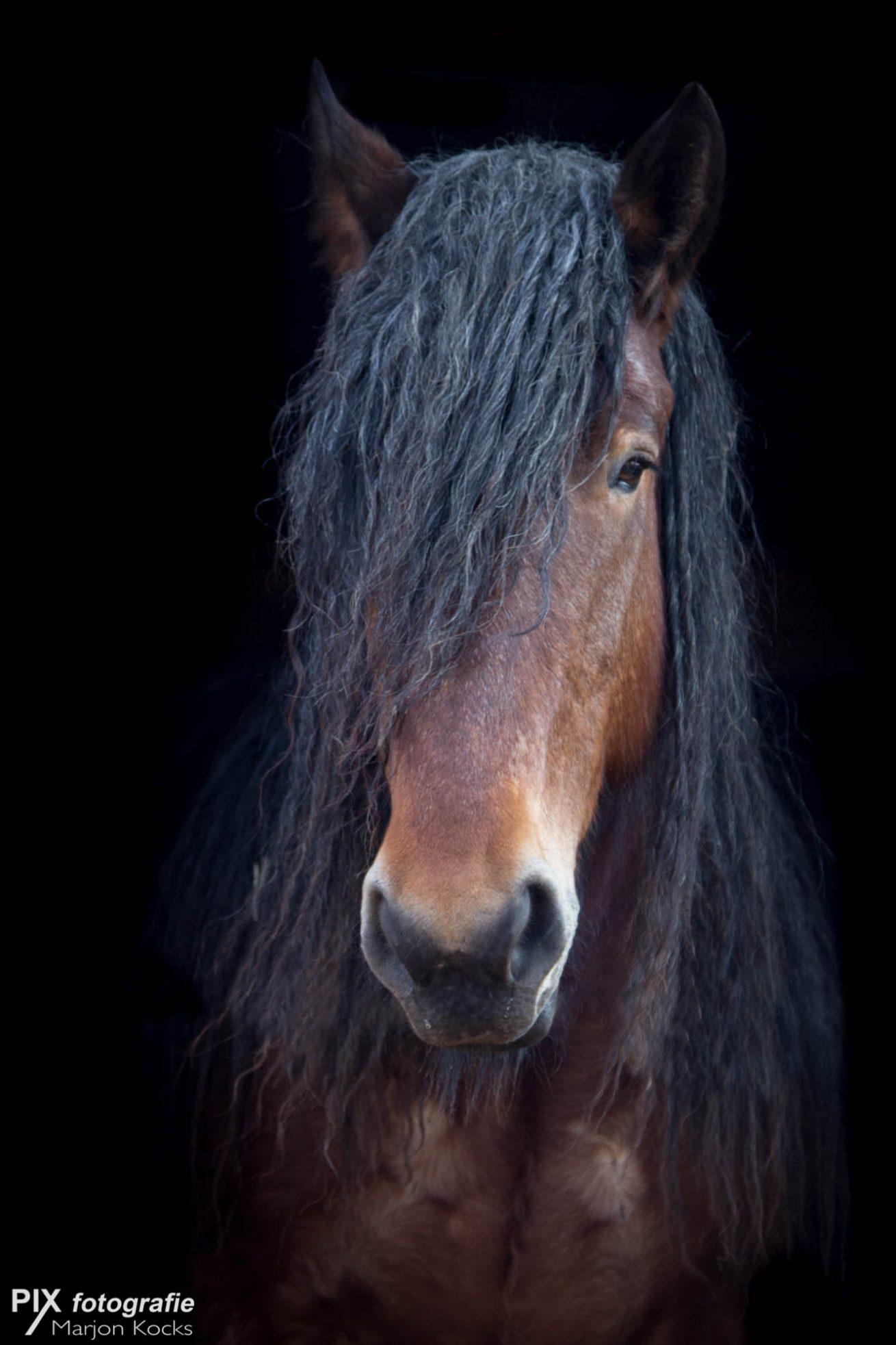 Zwarte achtergrond met paard  PIX fotografie de