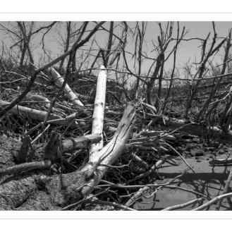Des arbres détruis - Destroyed trees
