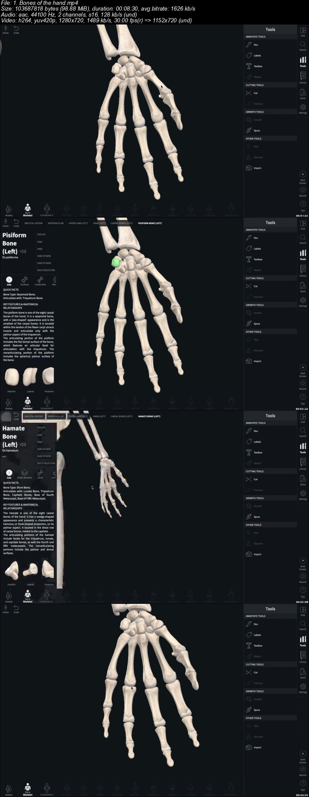 Human Skeletal System Part 1 The Upper Limb Avaxhome