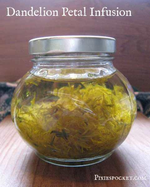dandelion infusion