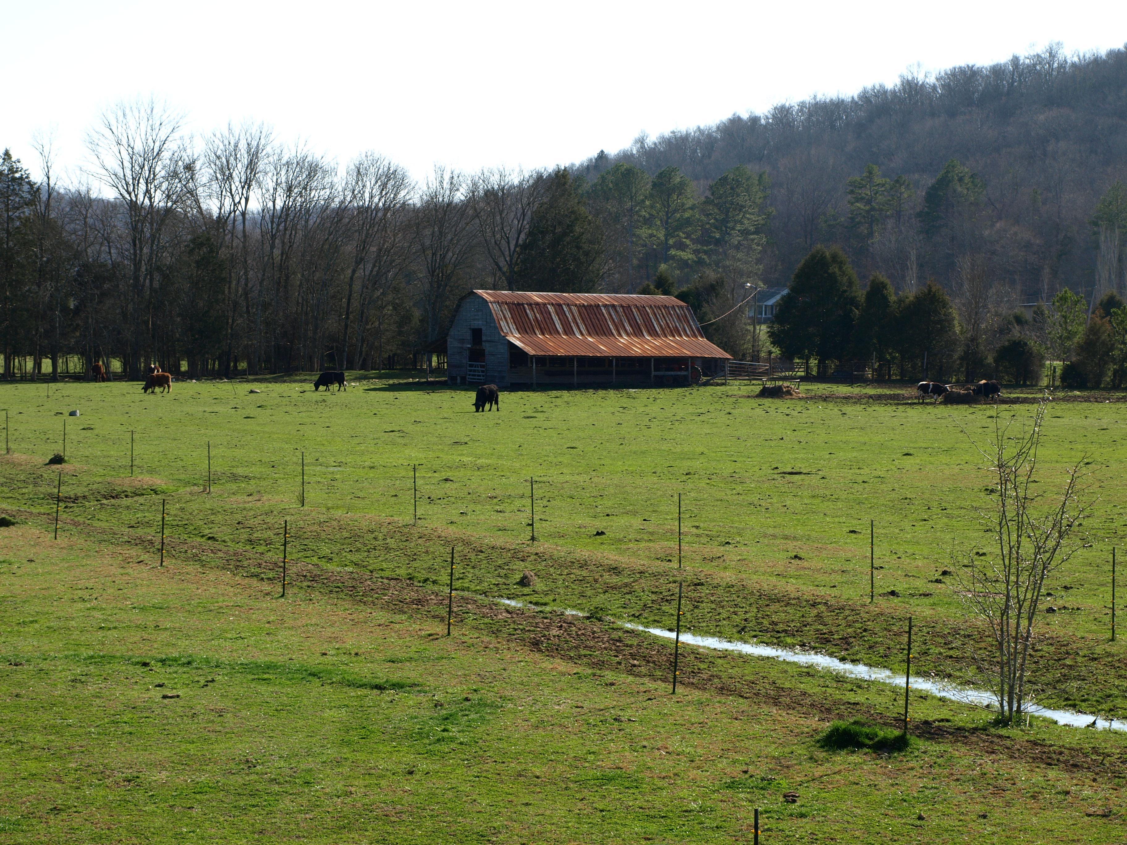 "A Cattle Ranch in Decalb County (pronounced ""Da-cab"")"