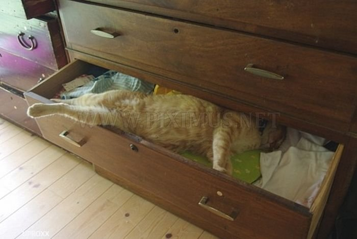 Funny Poses Of Chillin Cats Animals