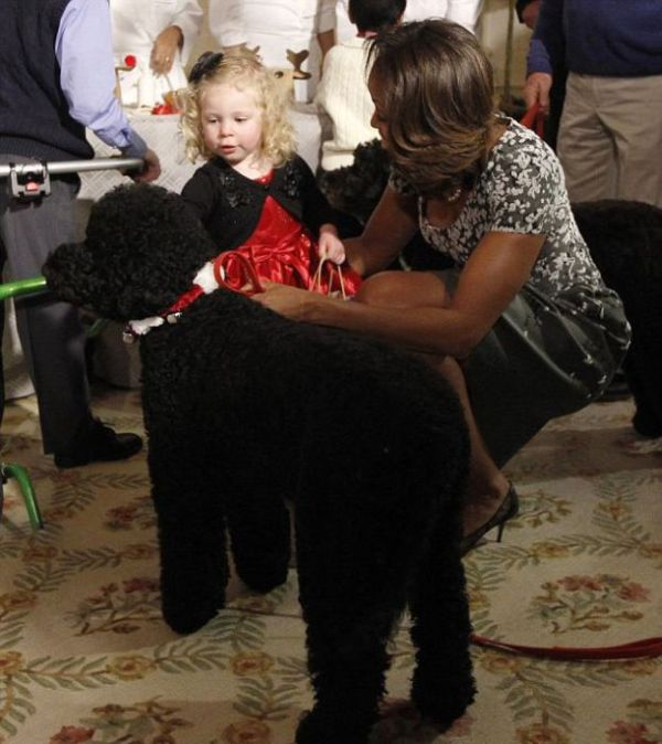 Obamas Dog Sunny Knocked Over A Little Girl Others