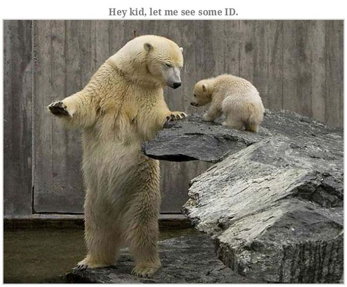 Bears Doing Weird Things  Animals