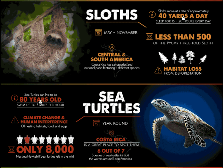 Endangered Species of Latin America