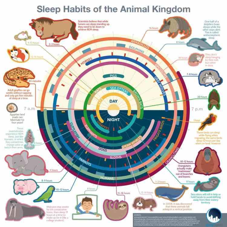 sleep-infographic-8