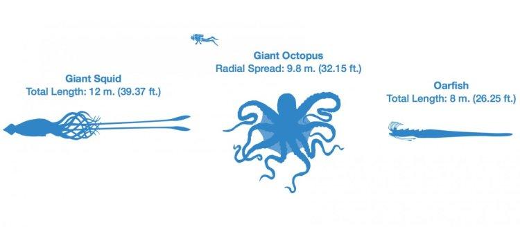 octopus-size-chart-comparison