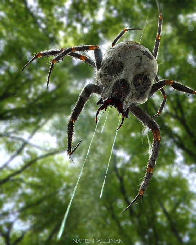 reddit-creepy-skulltula