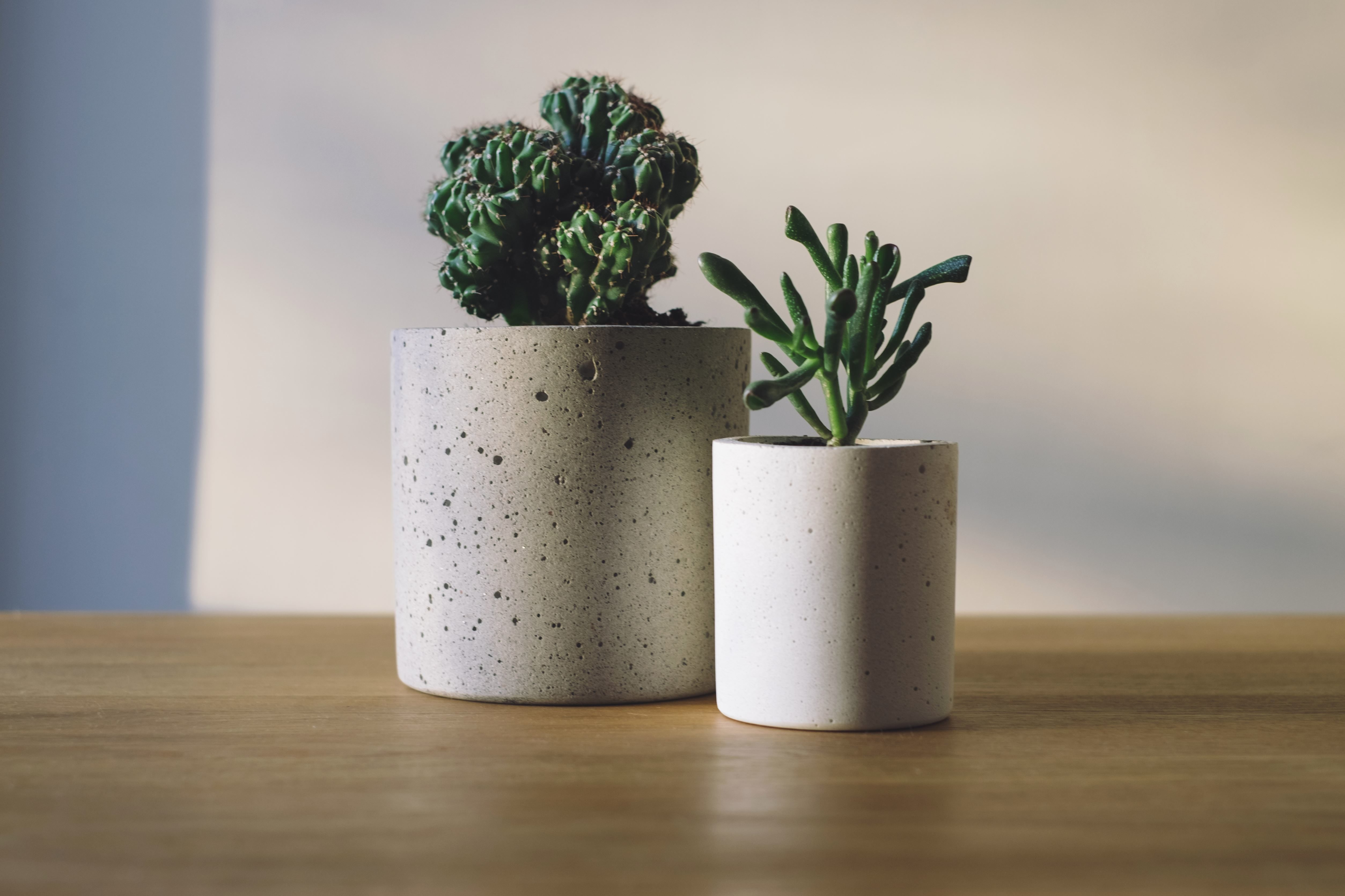 Free picture green plants cactus pots table