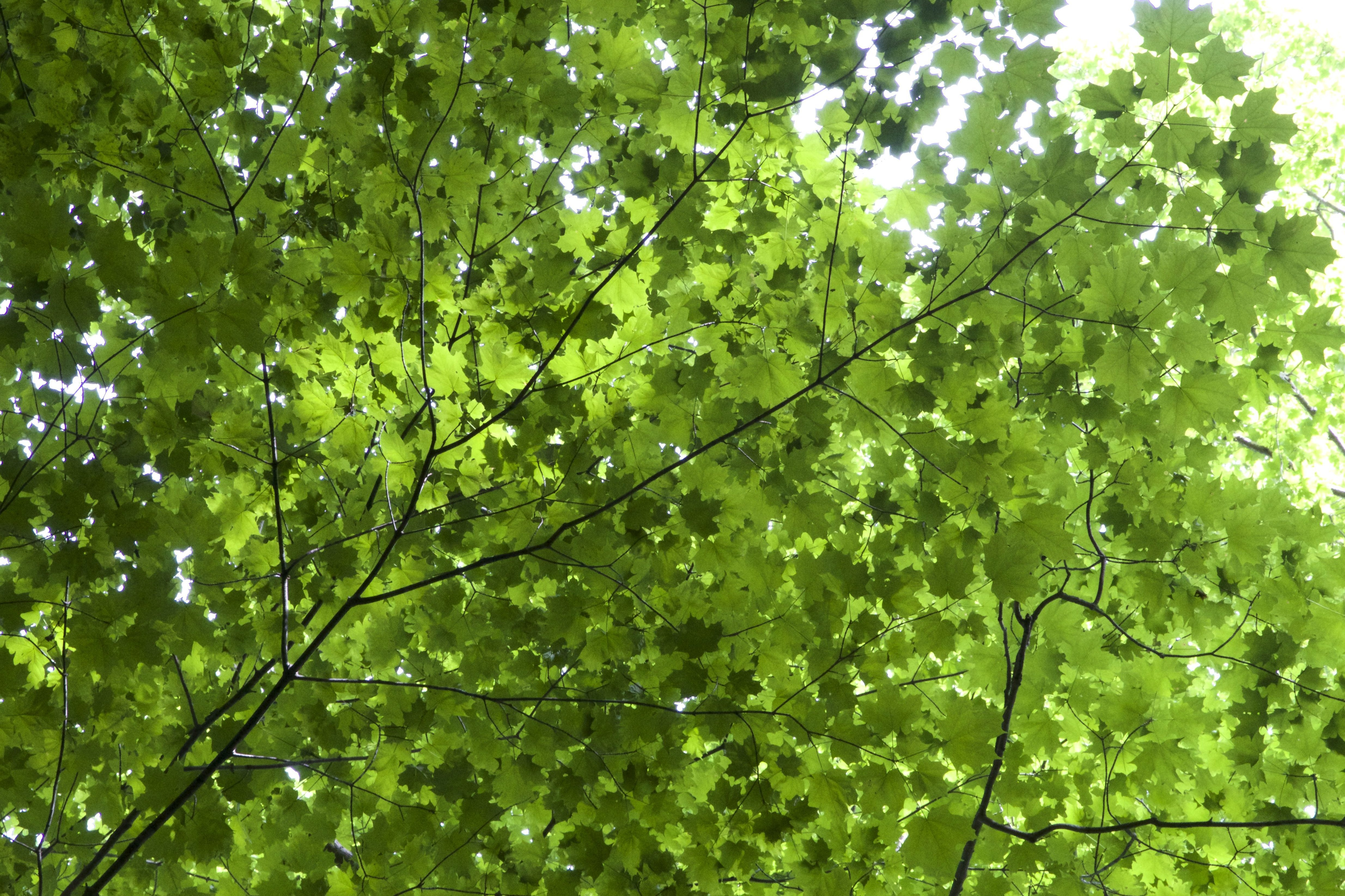 Iphone Collage Wallpaper Maker Free Picture Leaves Texture Green Leaves Under Tree Leaves