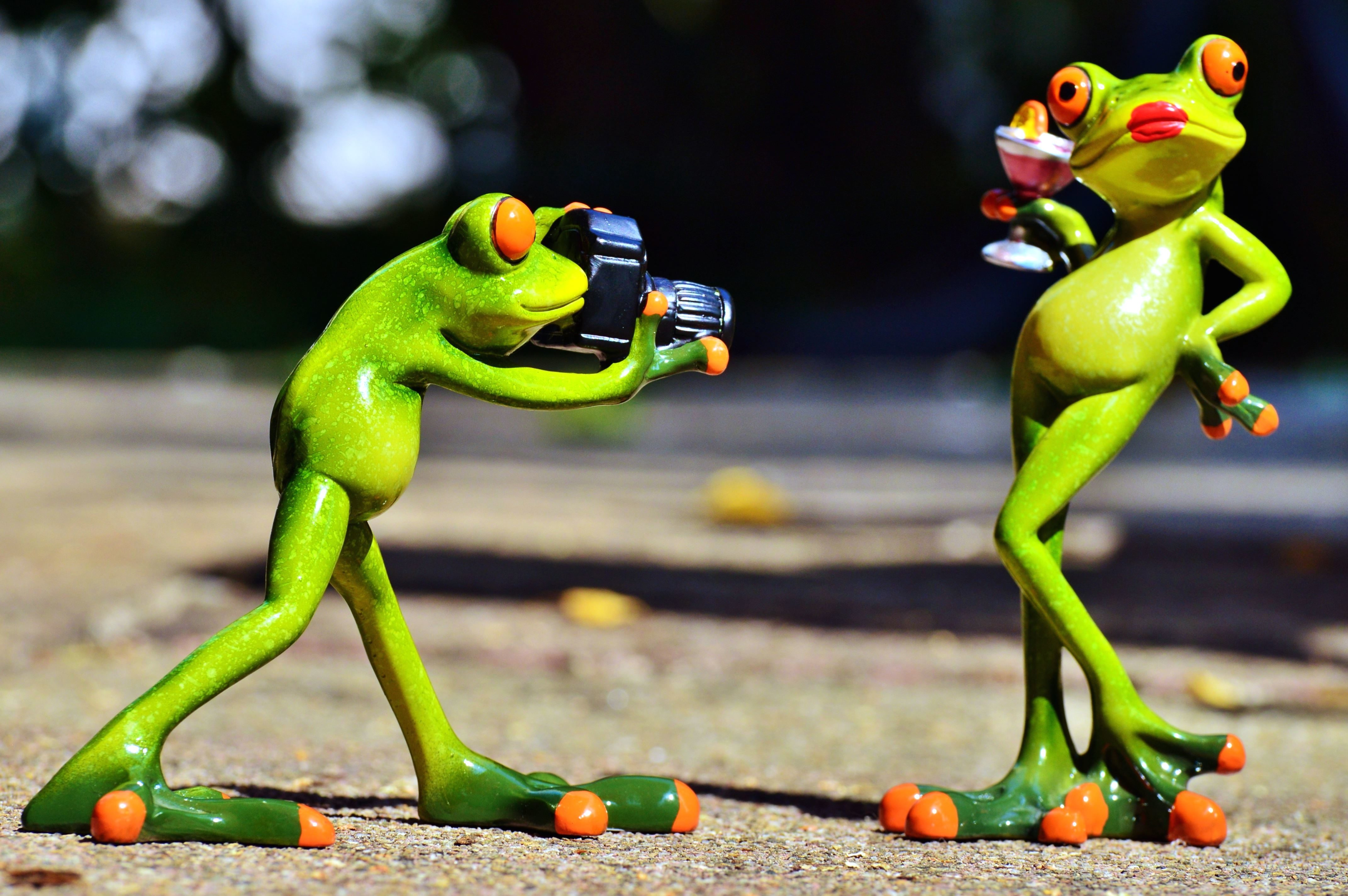 Free Picture Figurines Frogs Funny Photograph