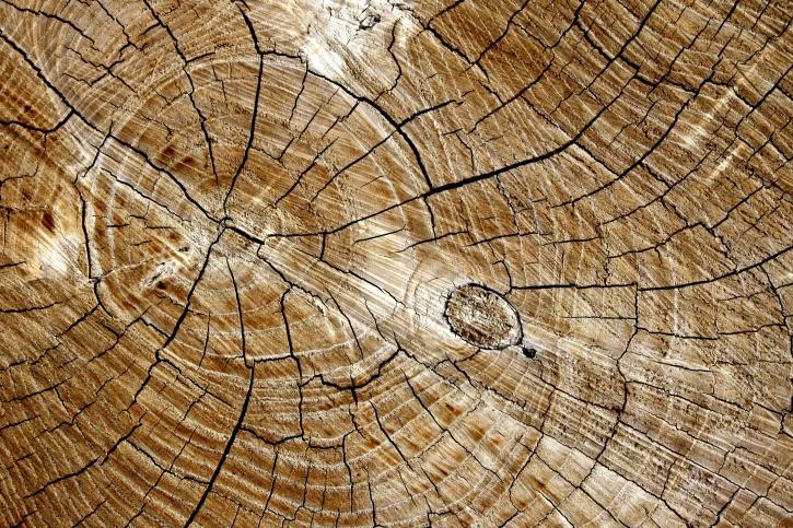 Imagen gratis corte tabla de madera textura anillo
