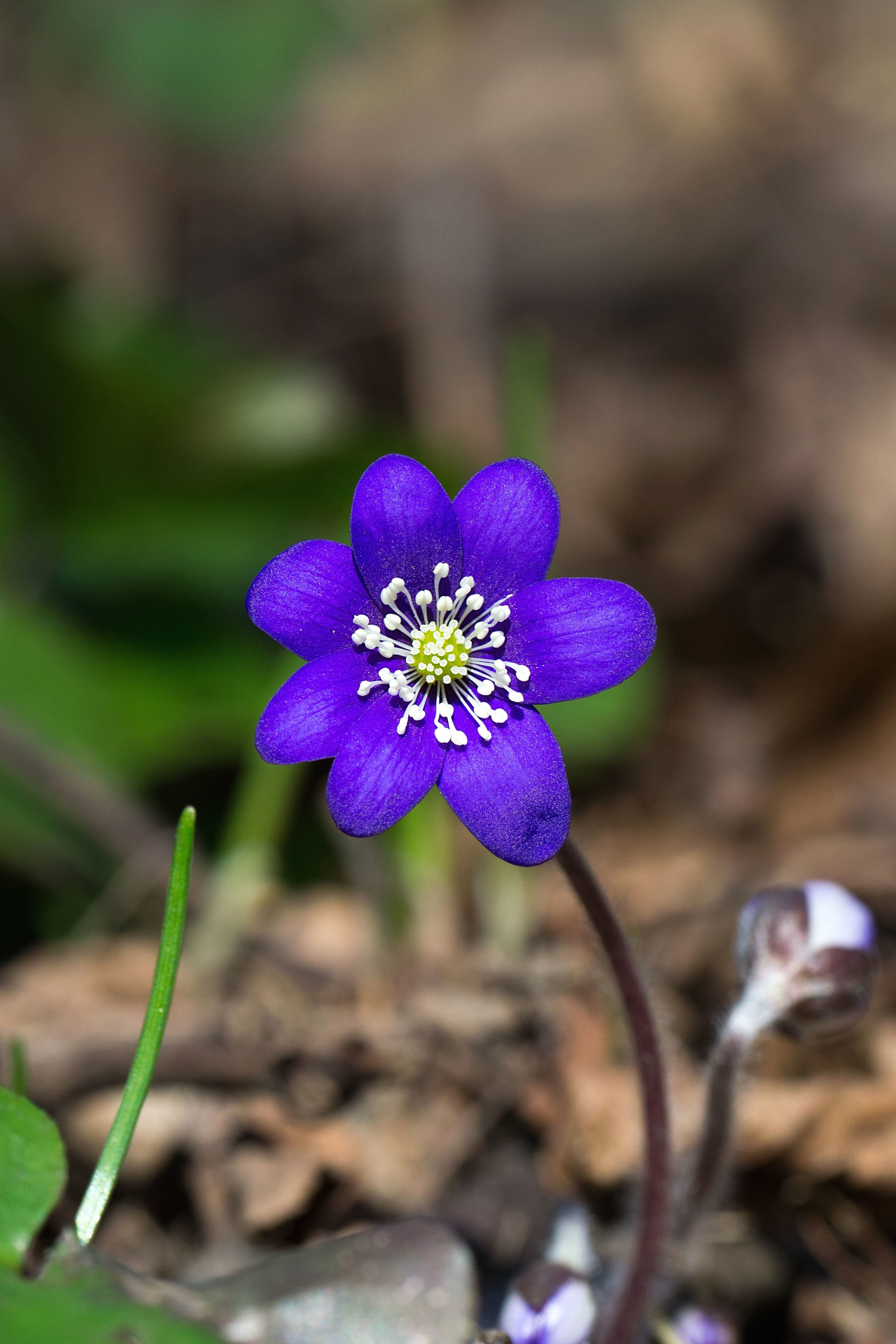 Free picture nature plant flora flower bloom color