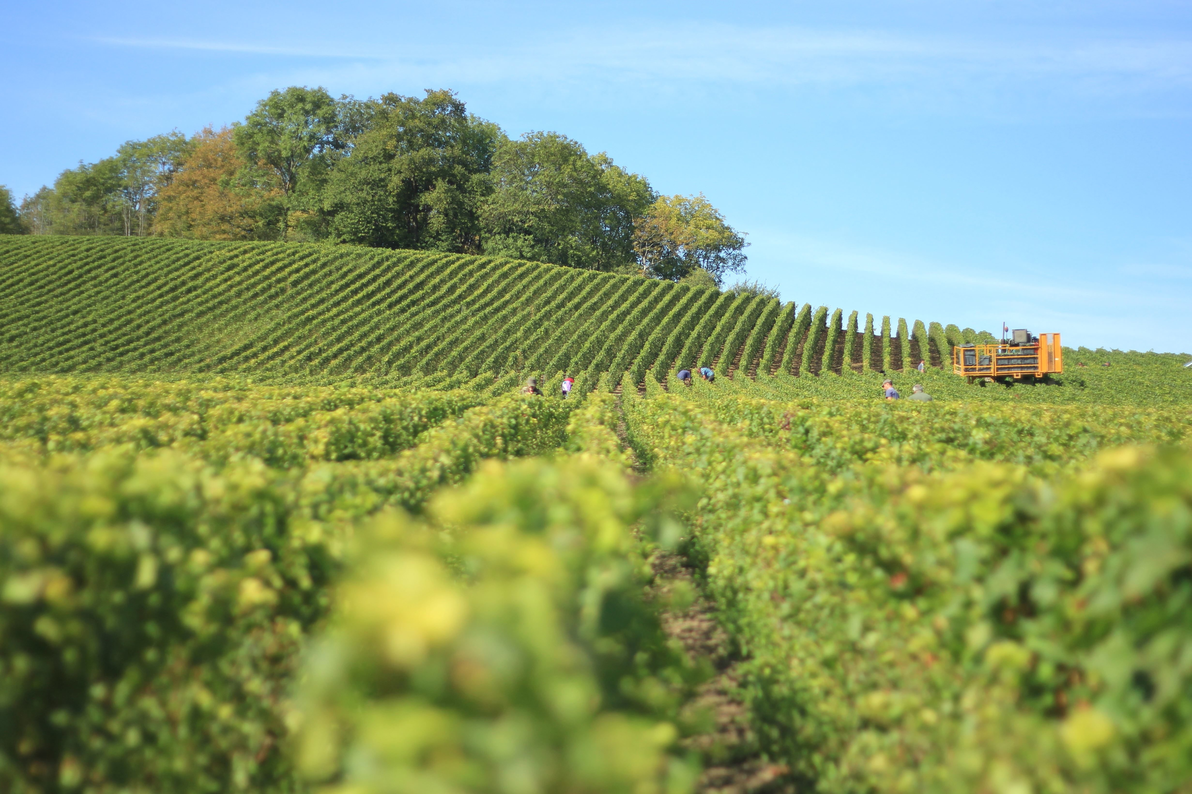 Free picture: vineyard, agriculture, countryside, crops, field