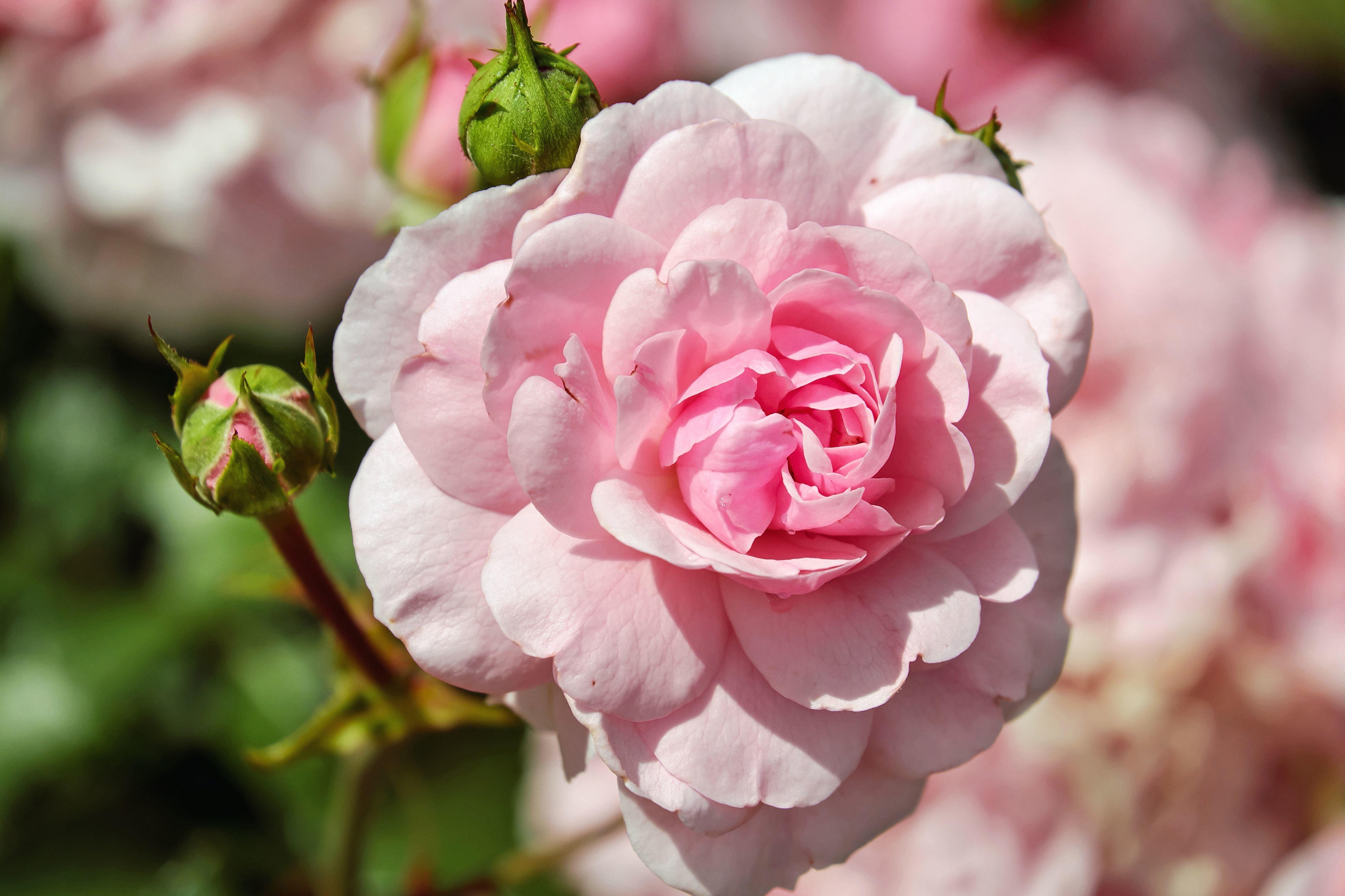 Foto gratis giardino fiorito flora gemma fiore fiori