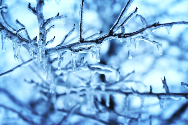Free Wallpaper 3d For Pc Free Picture Snow Ice Crystal Tree Branches Cold