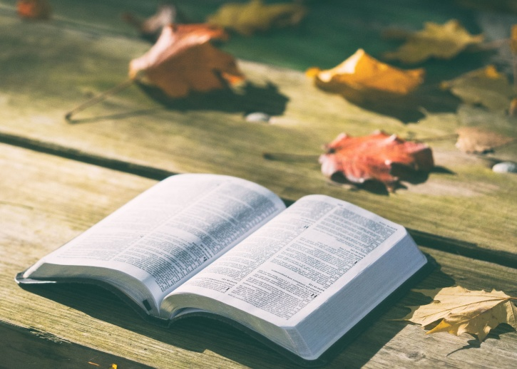 Free Picture Pages Bench Bible Book Dry Leaves Knowledge