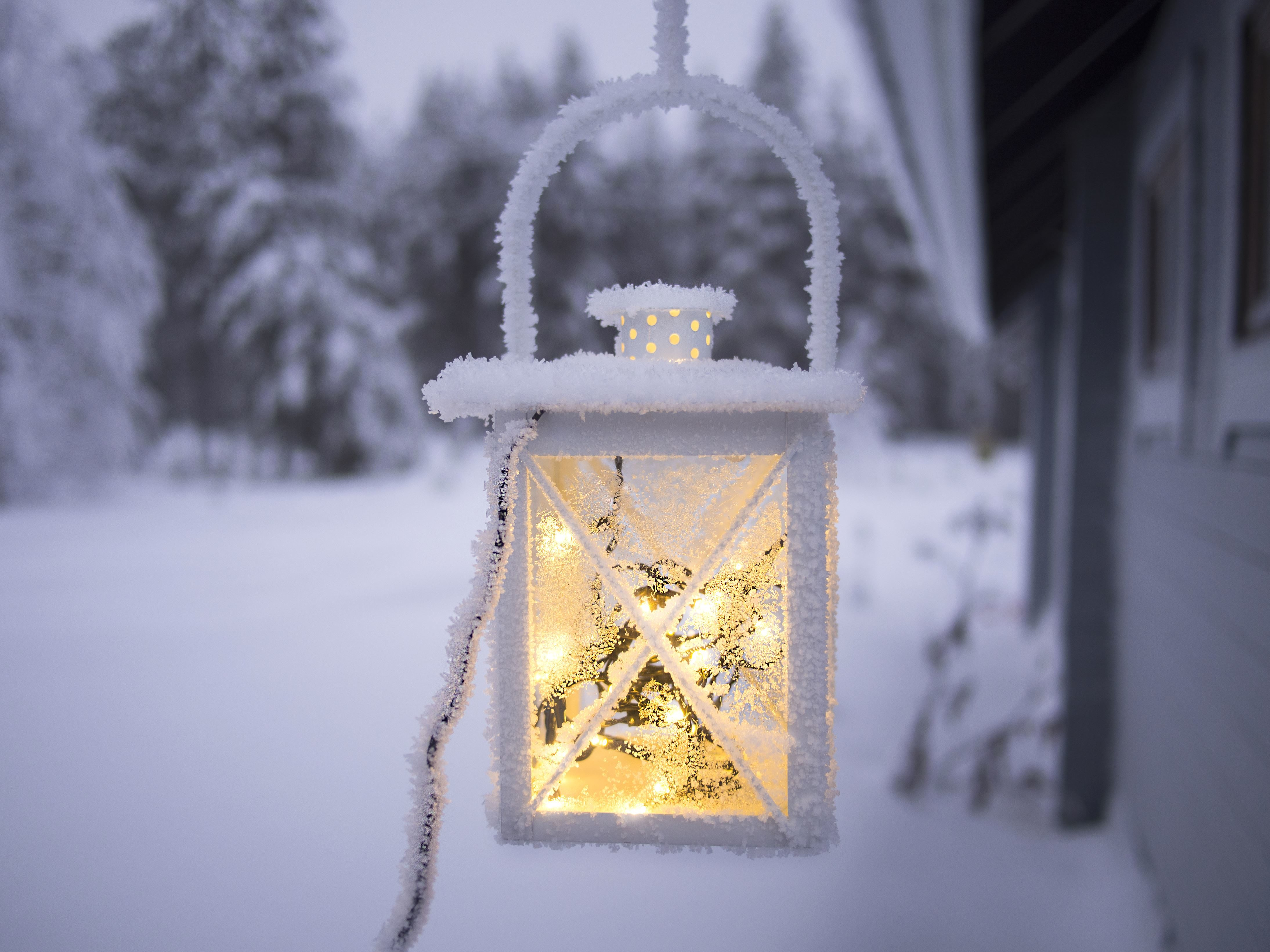 Free picture: snow, tree, winter, lamp, frost, frozen, ice