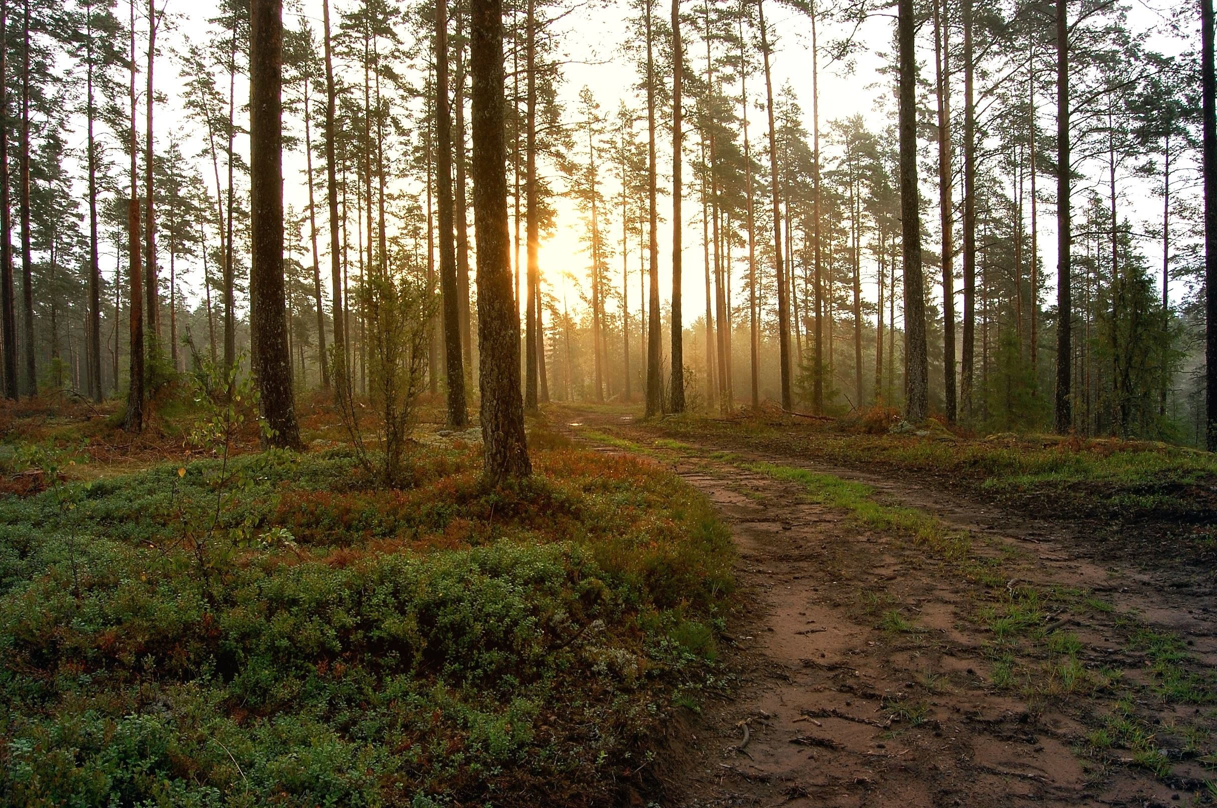 Free Fall Pictures For Wallpaper Kostenlose Bild Baum Holz Herbst Wetter Nebel Wald