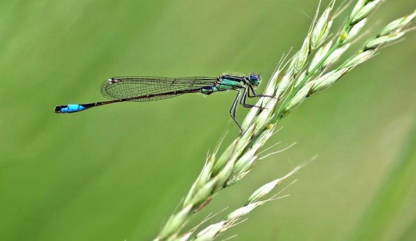 free dragonfly grass