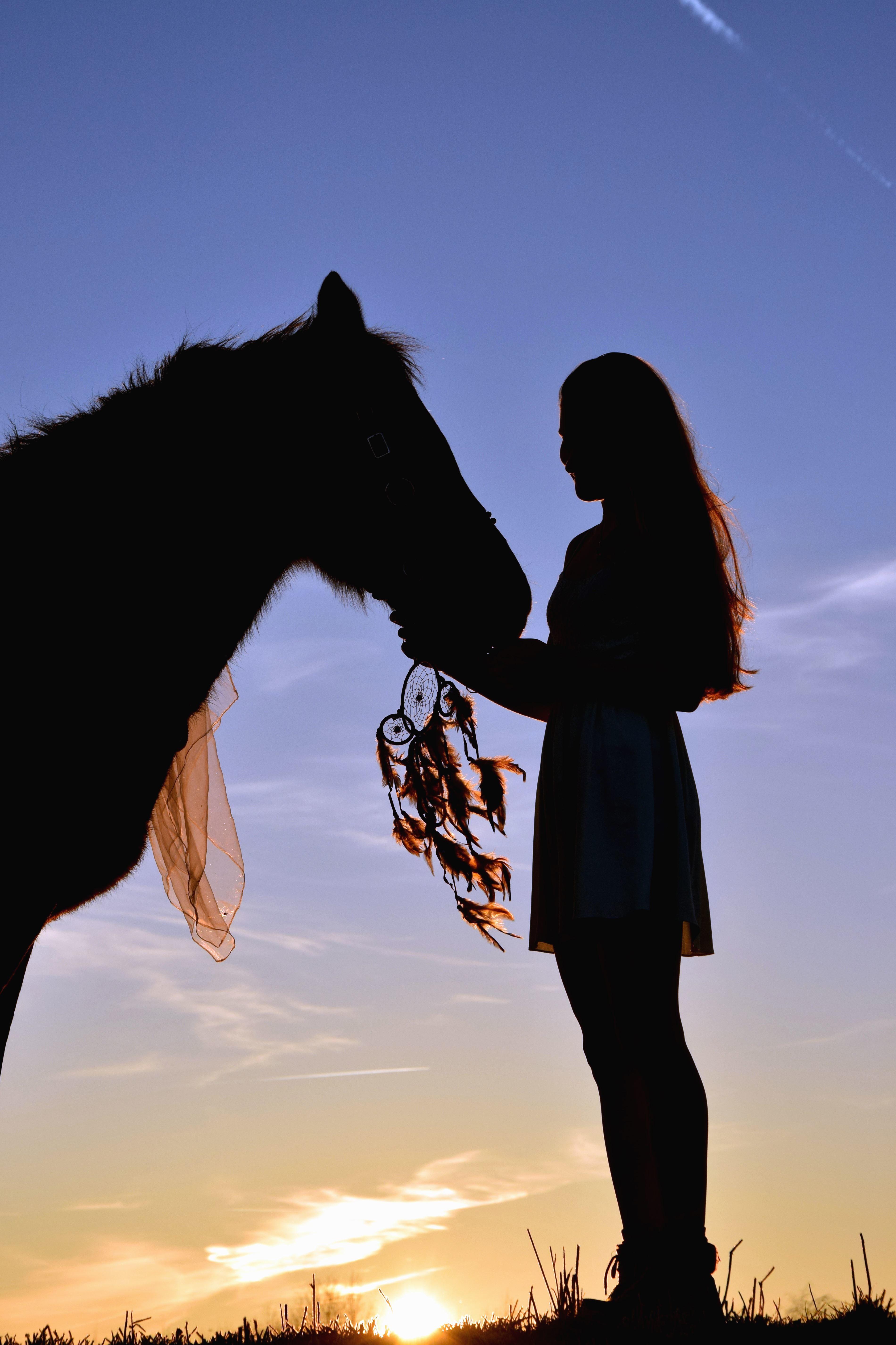 Imagen gratis Nia silueta caballo amor persona