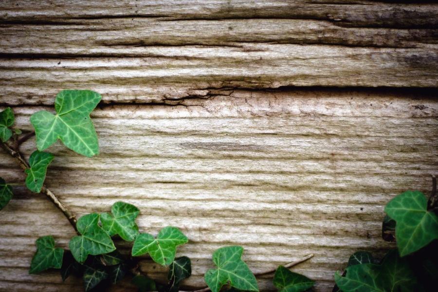 Image libre Bois mur texture lierre feuille plante