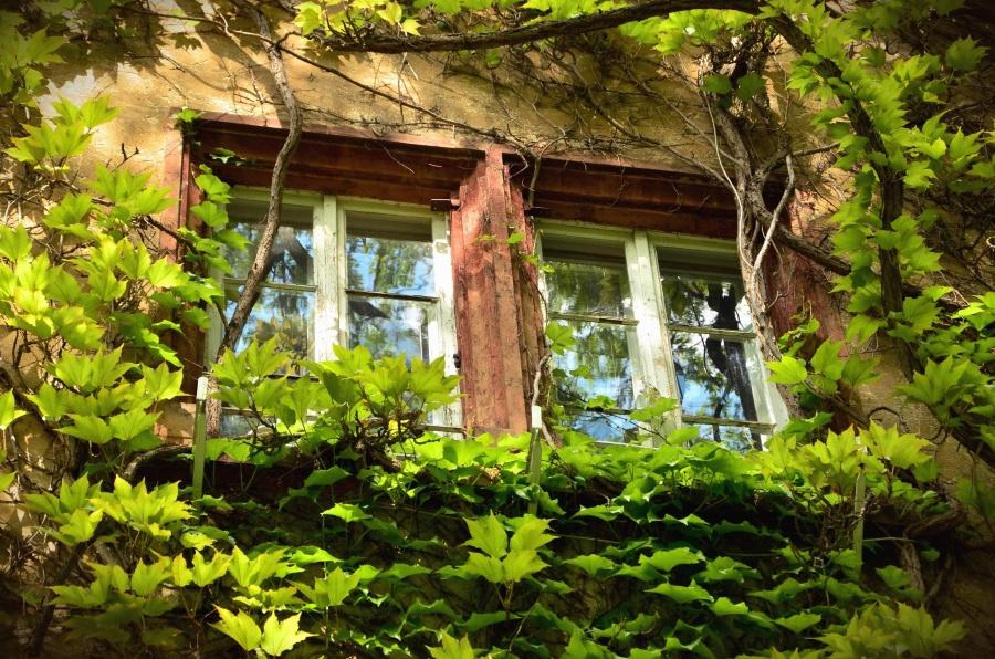 poignée de fenêtre