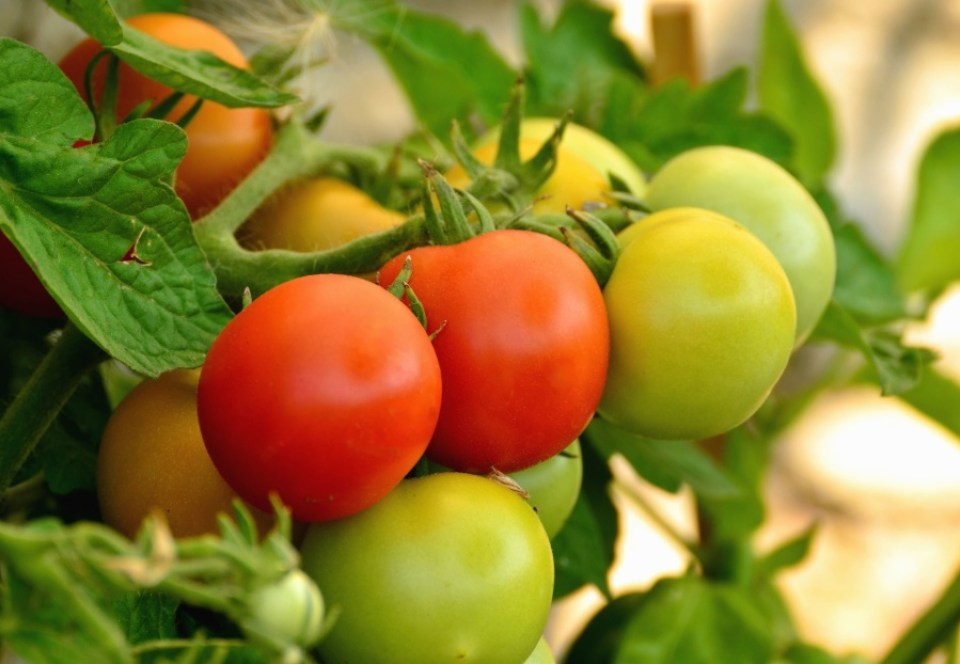 Image result for agric food