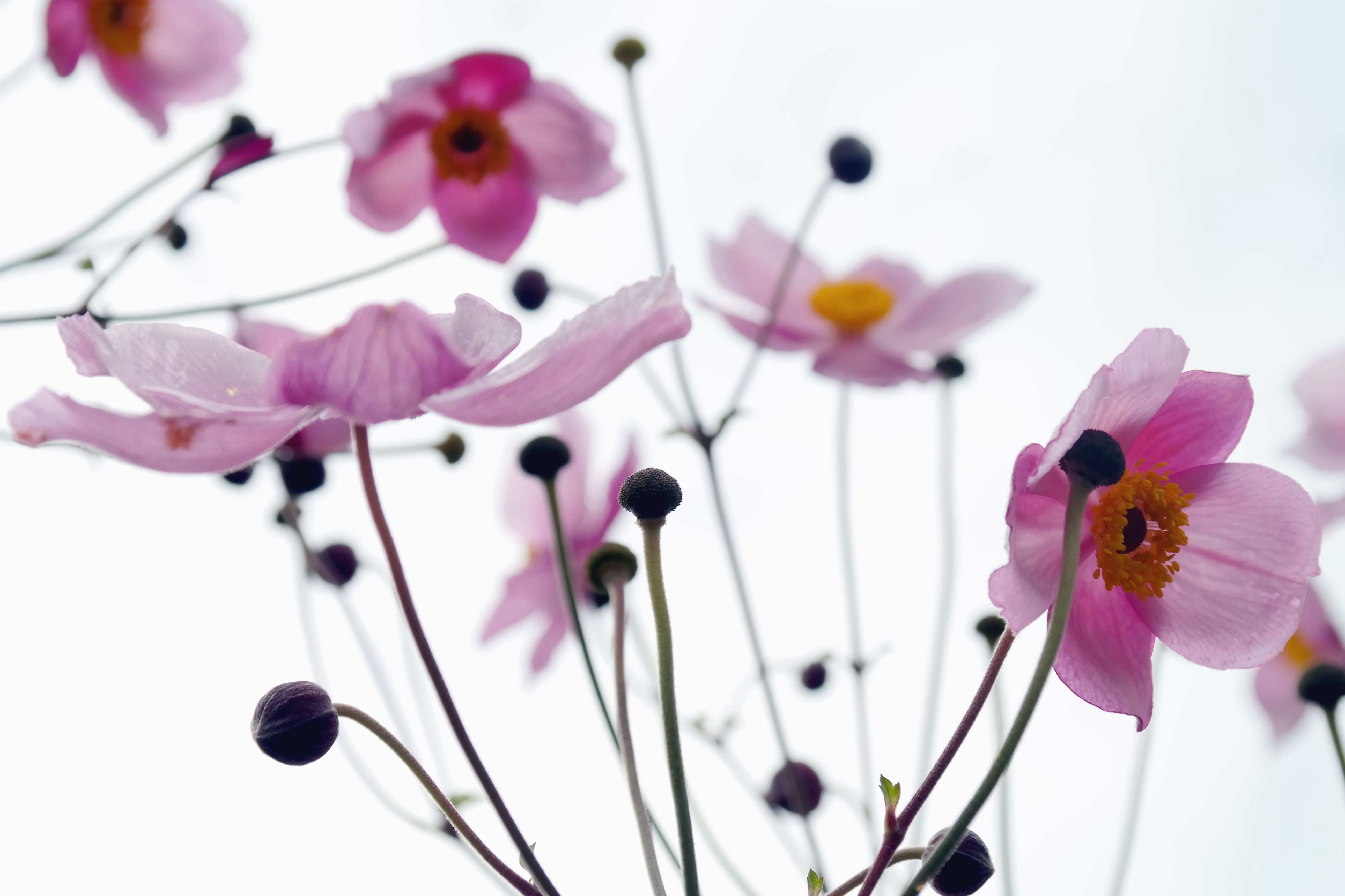 Image libre Fleur fleur printemps ptale tiges bourgeon plante