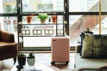 Free Suitcase Flowerpot Plant Table Travel